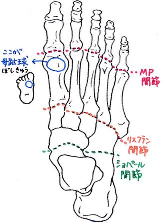 足の骨と関節のイラスト
